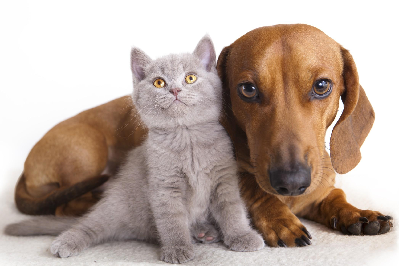cane-e-gatto-cuccioli